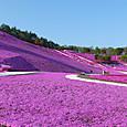 芝桜 東藻琴
